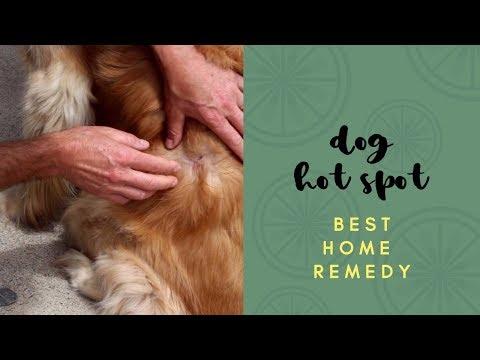 Xxx Mp4 Best Dog Hot Spot Home Remedy 3gp Sex
