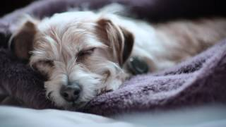 Poof Pet Activity Tracker