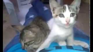 actress swathi naidu playing with cats