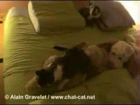 Xxx Mp4 Mèo A Des Relations Sexuelles Avec Wouaf Le Chien En Peluch 3gp Sex