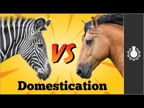 Xxx Mp4 Zebra Vs Horses Animal Domestication 3gp Sex