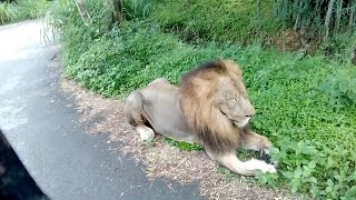 Jungle Safari in Bannerghatta   Karnataka   Explore the ODD