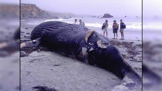 Whale's body washed ashore at Ganjam coast in Odisha