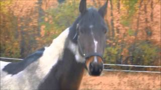 AHHJ RAINBOW RANCH ALASKA MYLO MOVIE