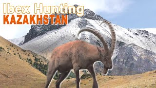 IBEX HUNTING (chasse)  KAZAKHSTAN by Ovini Expeditions