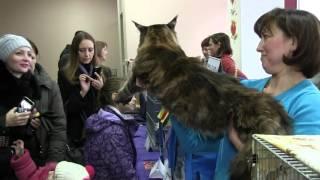 Луганская выставка кошек 12.13 декабря 2015