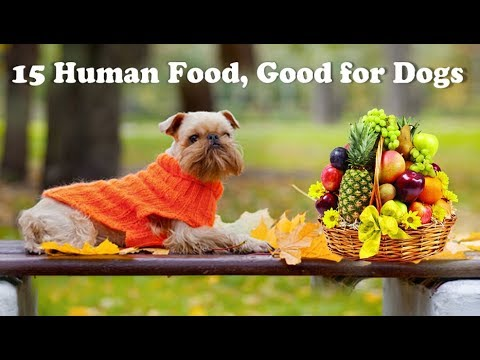 Xxx Mp4 15 Human Foods Good For Dogs 3gp Sex