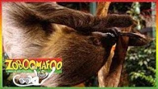 ▶ Zoboomafoo Episodes 284 - Buddies - Zoboomafoo Show Full Episode