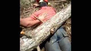Acidente arvore cai em cima de homem