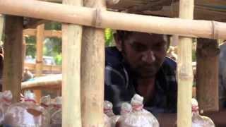 BBC Amrai Pari_Series 01_Episode 08_Mushroom Cultivation