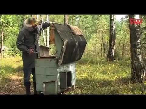 Pszczoły Odcinek 8 Na Tropie Program myśliwski Tv Trwam.mov