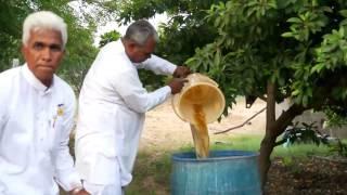 Jeevamrit Praparation | जीवामृत बनाने की विधि | Shashwat Yogic Kheti