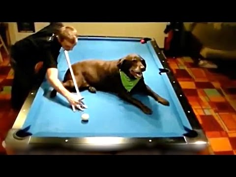 BEST POOL TRICK SHOTS