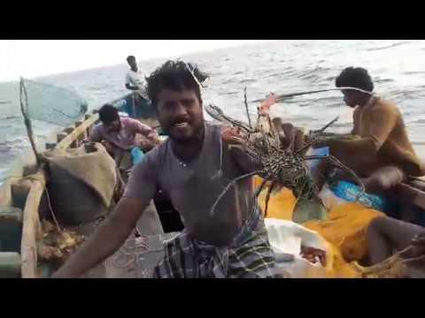 Xxx Mp4 மீனை மஞ்ச ஊத்தி அவிக்கிறது 3gp Sex