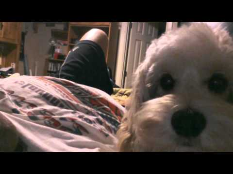 Xxx Mp4 My Dog Loli Video 3gp 3gp Sex
