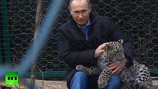 Video: Putin enters leopard cage at Sochi National Park