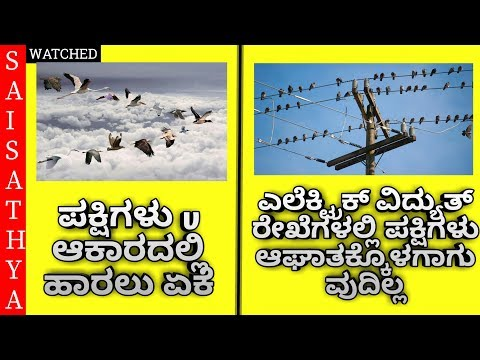 Xxx Mp4 Amazing And Interesting Facts Unknown Facts In Kannada By Sai Sathya 3gp Sex