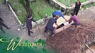 Wildflower: The Ardientes lock Ivy inside a coffin to bury her alive | EP 162