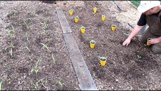 Start Your First In The Ground Garden! Easy Design Model