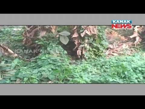 Wild Boars Invade Bhubaneswar