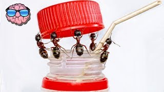Top 10 Most Intelligent ANIMALS In The World (Insects)