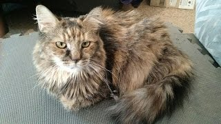 Z Review - Chewbacca the Cat