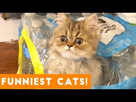 Try Not to Laugh Ultimate Cat and Kitten Compilation Funny Pet Videos
