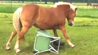 Funny Horse Videos Compilation 2014 [NEW]