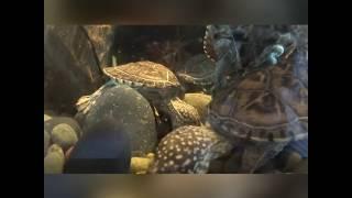 America talk show Animals Talk on The TSDn