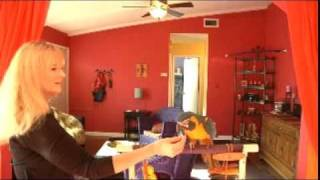 Parrot Flight Training - Recall and Go to a Perch