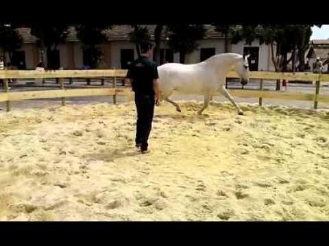 XXX Semana Nacional do Cavalo Campolin parte 2