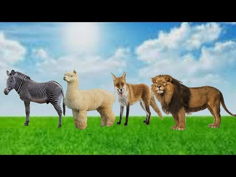 Learn Colors Zoo Wild Safari Animals Funny Wrong Heads Body Video for Kids Children to Learn Finger