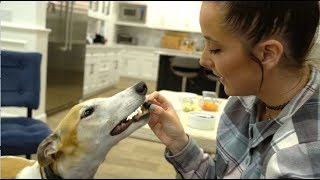 My Greyhound Tries Fruits And Vegetables