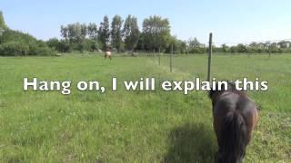 Horse language explained the way I see it