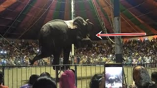 Bangladeshi Circus || Elephant Circus Show || হাতির খেলা দেখুন