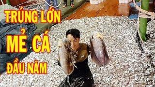 Ngư Dân Trúng Mẻ Cá Lớn Đầu Năm ! Xem Bắt Cá Biển / Fishing Boat