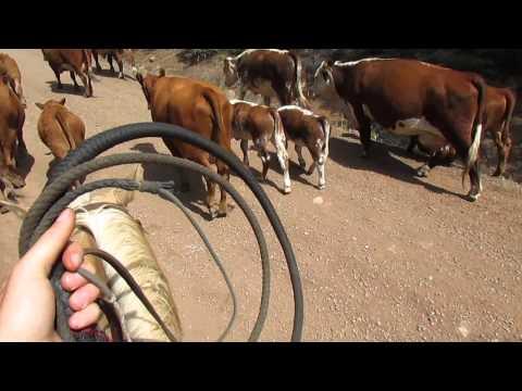 Xxx Mp4 Moving Cows Part 1 3gp Sex