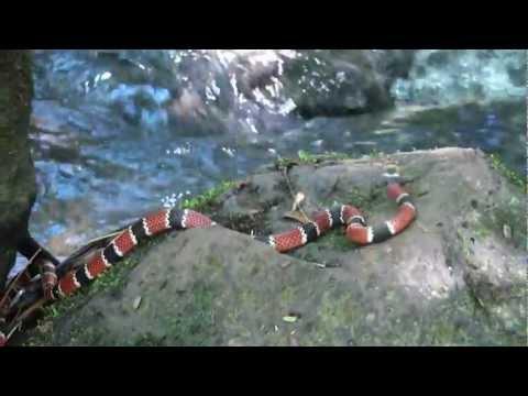Esta es una lista de las serpientes m0e1s venenosas del mundo