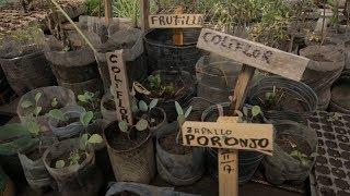 De baldío a huerta orgánica, gracias a un programa del Ministerio de Desarrollo Social