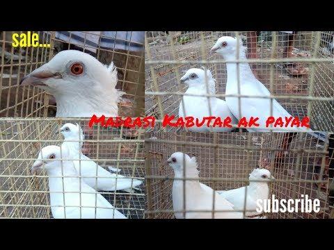 Xxx Mp4 Madrasi White Chotti Dar Sale Ak Payar Ka By Raza Photography Technical 3gp Sex