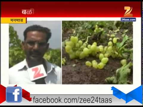 Xxx Mp4 Manmad Loss Of Grape Farms Because Of Snowfall 3gp Sex