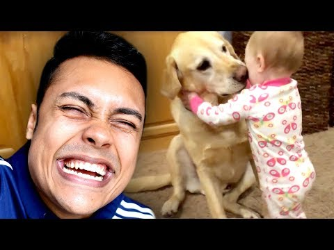 Xxx Mp4 REACTING TO CUTE FUNNY DOG VIDEOS TRY NOT TO SMILE 3gp Sex