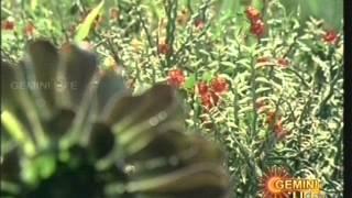 Balu,Susheela evergreen hit song