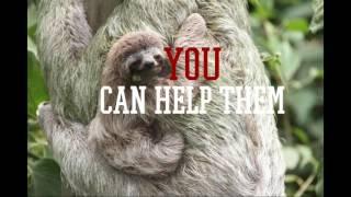 Save the Pygmy three toed sloths!