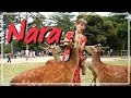 Download Video Download Nara Travel Guide | Bowing Deer + Japanese Street Food Tour 3GP MP4 FLV