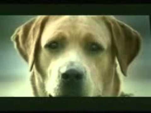 Xxx Mp4 Dog Sex Videos 3gp Sex