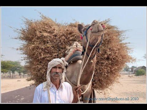 North India: Rajasthan part 1 (Mandawa, Bikaner, Desnok, Kichan and Phalodi)