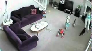 قط يهاجم جليسة الاطفال لما حس انها بتاذى الولد الصغير
