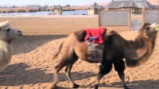 TEAN inner Mongolia trip