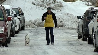 Golden Valley Volunteer Adds Up Miles Walking Dogs